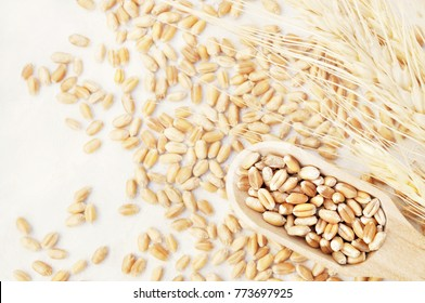 Wheat grains in wooden spoon on wheat ears plants background, selective focus, toned
