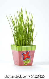 Wheat grass growing in a ceramic pink pot.