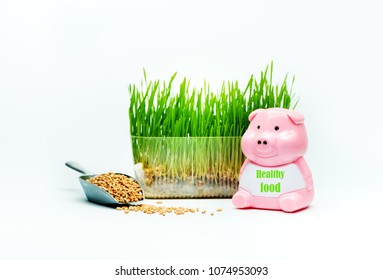 Wheat grass sprouts in a plastic container and a piggy with the inscription HEALTHY FOOD on a blue background