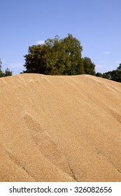 wheat harvest folded into a big pile. grain. cereals