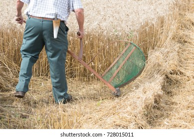 wheat harvest in the old way