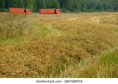 wheat harvest on the field situated near Moscow