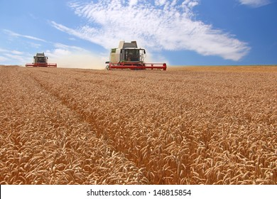 Wheat harvester in action
