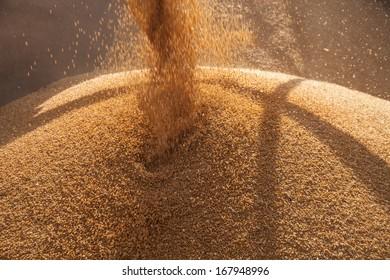Wheat Harvesting near Penong