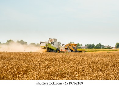 Wheat harvesting on field in summer season. Two modern combine harvesters with grain header, wide chaff spreader cut and threshes ripe wheat grain . Process of gathering crop by agricultural machinery