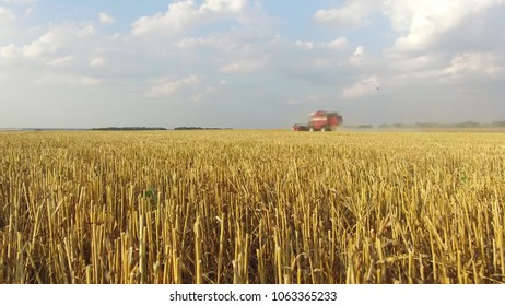 Wheat harvesting shearers. Wheat is harvesting agriculture. Harvesting video wheat bread steadicam shot motion