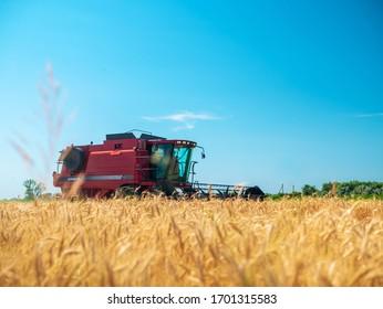 Wheat harvesting in the summer. Red harvester working in the field. Golden ripe wheat harvest agricultural machine harvester on the field. Kobelyaki / Ukraine - 06.27.2019
