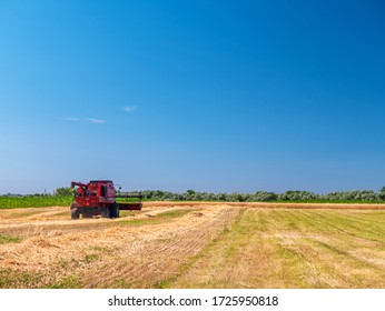 Wheat harvesting in the summer. Red harvester working in the field. Golden ripe wheat harvest agricultural machine harvester on the field