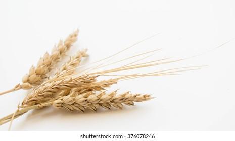 Wheat isolated on white background