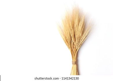 wheat isolated on white. Spikelets, sheaf