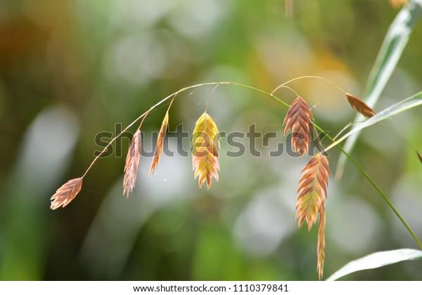 Wheat Leaves in the Prairie