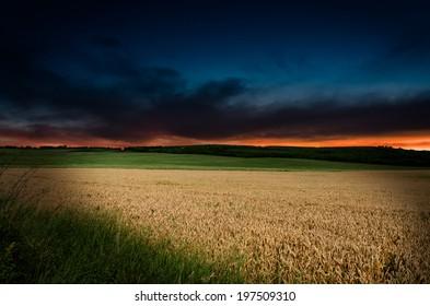 wheat in the night
