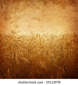 wheat on a grunge background