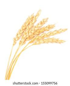 wheat on white background