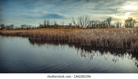 The wheat reflected in the mirror plain water of ordinary landscape. - Shutterstock ID 1342281596