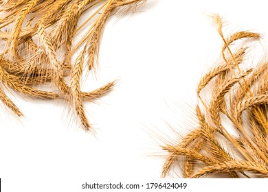 Wheat rye barley oat seeds. Whole, barley, harvest wheat sprouts. Wheat grain ear or rye spike plant isolated on white background, for cereal bread flour. Top view, cutout.