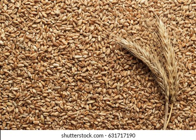 wheat seeds for sprouting on the table