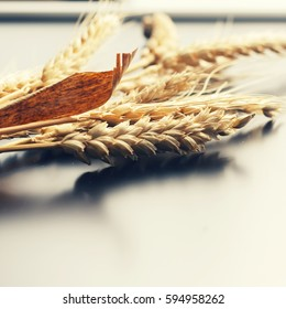 Wheat spike on a black background. Concept: harvest