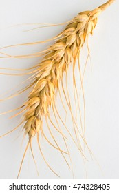 Wheat spikelet on white background. Closeup. Top view