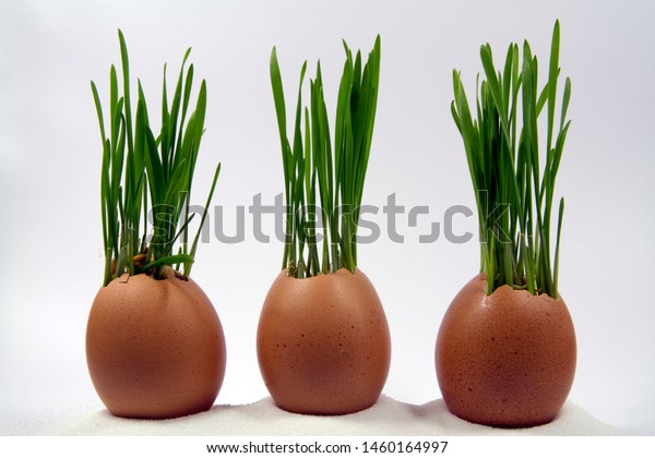 wheat-sprout-egg-shells-600w-1460164997.