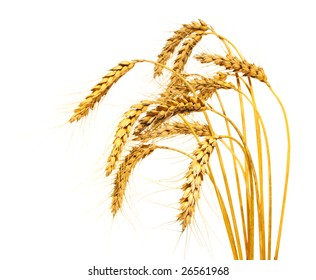 Wheat stems, isolated over white