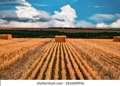 Wheat straw in square bales of hay spread over a mown field and blue sky with clouds