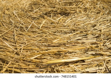 Wheat straw. Textured abstract background for design.