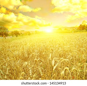 wheat sunset sunrise
