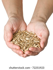 wheat in woman's hand isolated on white