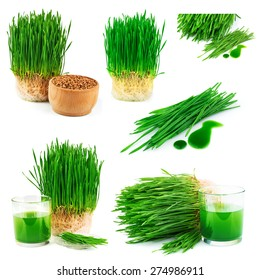 Wheatgrass juice with sprouted wheat and wheat seeds isolated on white background, set