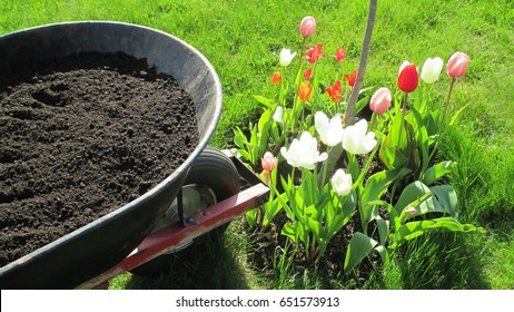 Wheel barrow filled with black composted soil beside a colorful flower bed