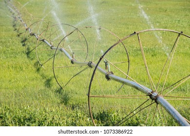 Wheel line sprinkler irrigation system, watering a crop