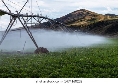 Wheel line sprinklers water potatoes in an Idaho field, surrounded by beautiful mountains.