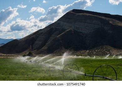 Wheel line, or traveling sprinkler, irrigation system in central Oregon, watering green pasture.