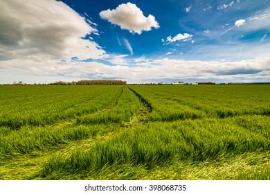 Wheel tracks in green cultivated fields