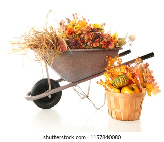 A wheelbarrow and basket full of colorful fall foliage. Isolated on white.