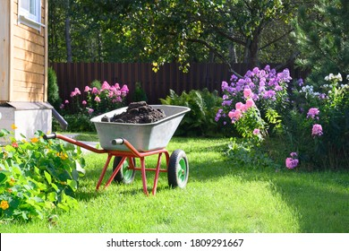 Wheelbarrow full of humus and compost on green lawn with well-groomed phlox flowers in private farmhouse. Seasonal gardening. Outdoor.