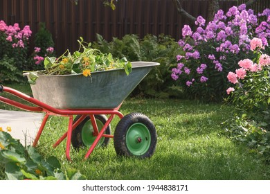 Wheelbarrow full of humus and compost on green lawn with well-groomed phlox flowers in farmhouse. Gardening. Outdoors.