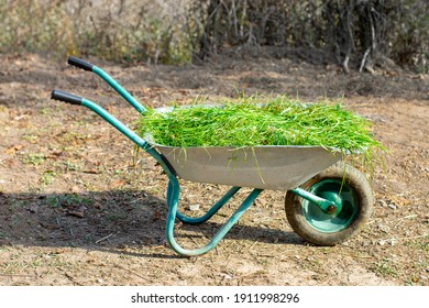 Wheelbarrow with garden waste on a green lawn. It's a summer day, the midday sun shines. View from the side.