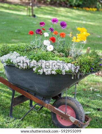 Wheelbarrow Planter Beautiful Flowers Garden Stock Photo (Royalty Free)  592955099   Shutterstock