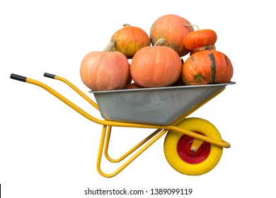 wheelbarrow of pumpkins isolated,Harvest pumpkins full wheelbarrow isolated on white background
