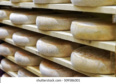 Wheels of aging Cheese on wooden shelves in ripening cellar of Franche Comte creamery in France