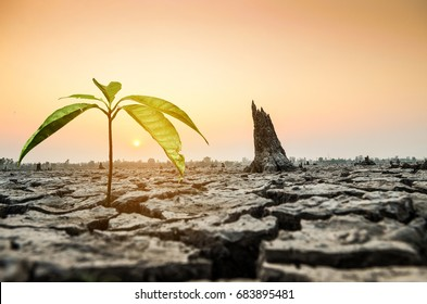 When our world water shortage,dry earth and sunset sky,Tree is growing from dry ground.