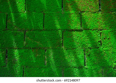 When the wall becomes wet after rain, it will cause green moss to fill the area.