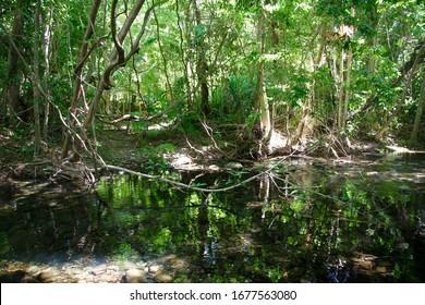 Where the Daintree Rainforest meets the Coral Sea at Cape Tribulation, Queensland, Australia