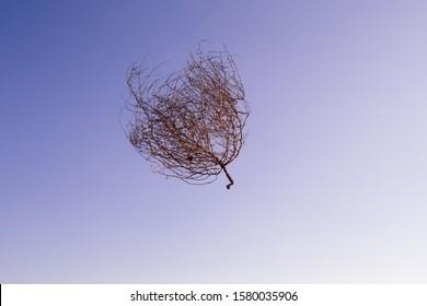 But where has that tumbleweed run away to anyway?