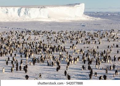 Where is Waldo (the Emperor penguin)?