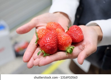 While the Nonsan Strawberry Festival only lasts a few days, strawberry season in Korea runs from December through June, so we went strawberry picking at a visitor-friendly farm instead.