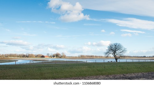 Whimsically shaped tree in the foreground of a partially flooded polder in the Netherlands. It is a sunny day in the end of the winter season in the National Park Biesbosch.