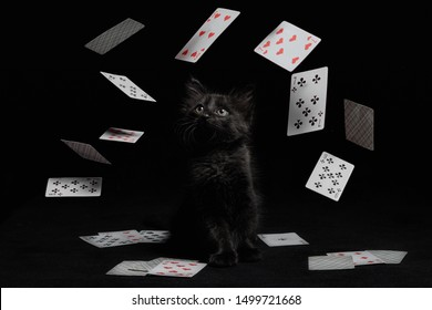 whirlwind of playing cards around a black kitten